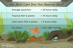 Aquarium lighting is necessary for living plants as well as fish but can cause excess algae growth unless you carefully control it. Tropical Fish Aquarium, Nature Aquarium, Planted Aquarium, Led Aquarium Lighting, Plant Lighting, Cool Lighting, Lighting Ideas, Plant Images, Plant Pictures