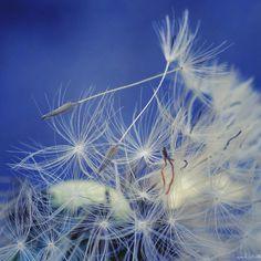 Seed... Macroholic
