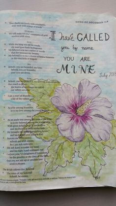 Entry 1 Rose of Sharon July 2015