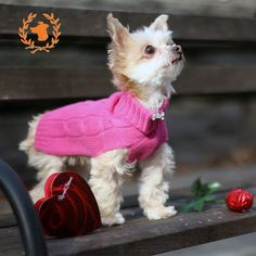 Will you be my Valentine!? Looking pretty in Hot Pink Cashmere Dog Sweater