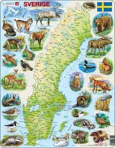 Karta över Sverige med djur