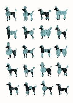 Modern #Poodle #Grooming #Chart