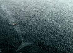 Fotos aterradoras hechas en el agua.Recuerda: lo más pesado en la vida — es la ballena azul. El resto – son boberías.