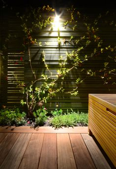 Evergreen jasmine climbers trained on to the fences in this contemporary roof garden. Outdoor Spaces, Outdoor Living, Planting, Gardening, Veg Patch, Roof Deck, People Photography, Climbers, Home