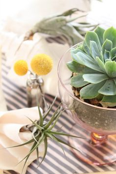 succulents, stripes, airplants