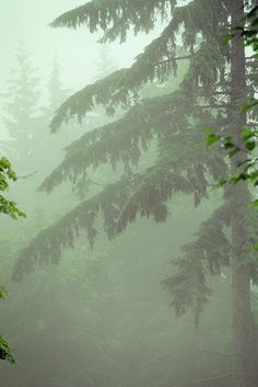 Deep green, Washington State~~It's not called The Evergreen State for nothing.
