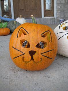 Orange pumpkin cat