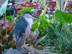 birdie Bird, Photography, Animals, Photograph, Animales, Animaux, Birds, Photo Shoot, Animal