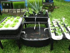 How To Build A Cheap DIY Backyard Aquaponics System! 4