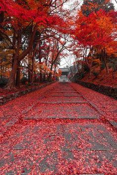 Crimson carpet - Autumn leaves in Bishamondo Temple, Kyoto, Japan