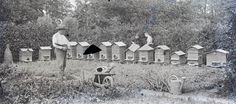 vintage photo French Beekeeper Hives Glass Negative 1930s RARE apicultrice.