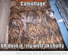 Cute picture captions quotes funny animal pics captions