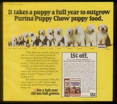 1979 Old English Sheepdog 12 photo Puppy Chow print ad   eBay