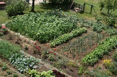 Je nejvyšší čas připravit se novou sezonu zeleniny, a proto musíme roztřídit osivo, naplánovat záhony, případně si pořídit nové odrůdy. To, že na stejném záhonu bychom neměli pěstovat stejné zeleninové druhy několik let po sobě, ví zřejmě každý. Důležité je ale dodržovat i správný osevný postup a