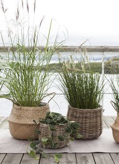 Green plants in the seagrass basket, Indoor Garden, Indoor Plants, Outdoor Gardens, Plant Design, Garden Design, Garden Cottage, Home And Garden, Pot Jardin, Balcony Plants