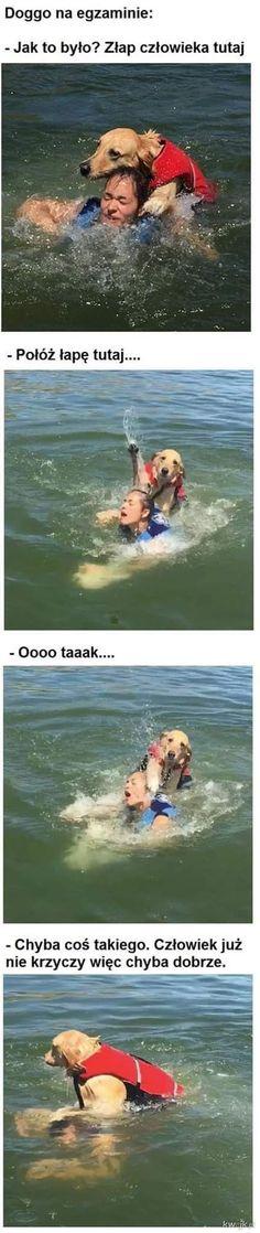 Polish Memes, Weekend Humor, Wtf Funny, Haha, Harry Potter, Jokes, Anime, Movie Posters, Husky Jokes
