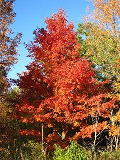 Fall colors in Door County WI