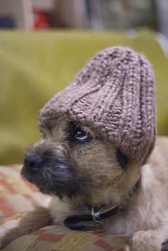 the 315 best border terriers i love them images on pinterest