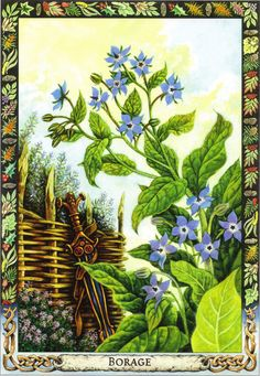 Borage | Druid Plant Oracle by Philip and Stephanie Carr | Illustrated by Will Worthington | Meaning: courage, joy and forgetfulness | Reversed: caution, inner courage and acceptance of suffering