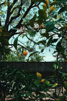 I wonder how I wonder why Yesterday you told me 'bout the blue blue sky And all that I can see is just a yellow lemon-tree