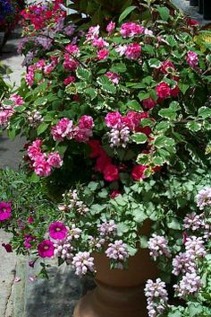 Container Gardens for Shade