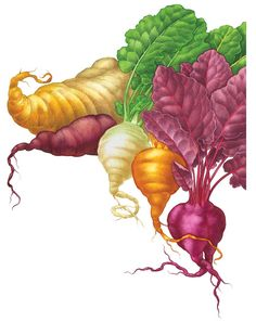All About Growing Beets Growing beets in your garden, and cooking beets in your kitchen, will open your world to rarer beet varieties, including 'Chioggia' and golden beets