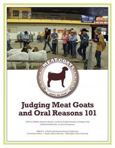 How To Raise Goats: Natural Goat Care for Meat, Milk and Profits in Your Backyard - Tools And Tricks Club Livestock Judging, Showing Livestock, Small Goat, Show Goats, Goat Care, Boer Goats, Raising Goats, Show Cattle, Animal Science