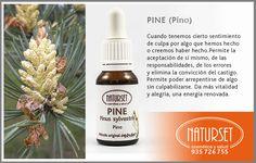 Pine - Flores de Bach de Naturset Bach Flowers, Bush, Gaia, Reiki, Style, Appliance Cabinet, World, Medicinal Plants, Bicycle Kick
