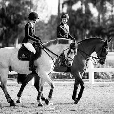 Talking in the warm-up arena with your showjumping friend is the best! Cute Horses, Pretty Horses, Horse Love, Beautiful Horses, Horse Photos, Horse Pictures, Dressage, Arte Equina, Show Jumping