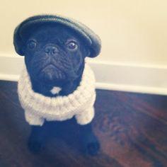 Pug. Flat cap. Sweater.