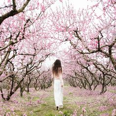 by maralazaridou on VSCO - March 2015 Pink Blossom Tree, Almond Blossom, Pink Trees, Peach Trees, Peach Blossoms, Blossom Flower, Spring Photography, Photography 101, Photography Backdrops
