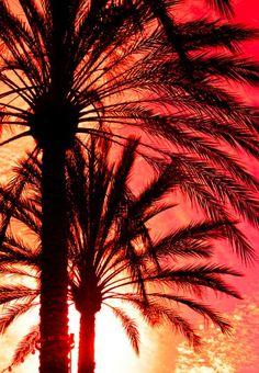 Sun through the palms...
