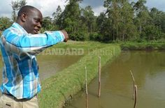 """Standard Media: Want to reap more from your fledgling fish pond? Try fingerlings farming. """"Thou shall not overstock your fish pond"""" is a popular aquaculture command that if broken leads to poor quality produce, or so the decree goes. Standard Media, Kenya #FarmAfrica #Kenya #farming"""