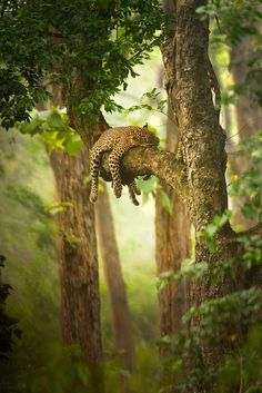 lazy afternoon in the rain forest  I would join if I wouldn't be eaten. RD