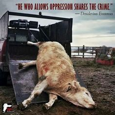 Abused, beaten and murdered for a taste sensation.
