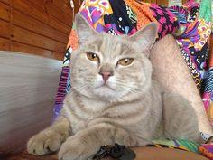 https://www.instagram.com/p/BV6E7Sol0DF/Коту видимо надоело что я валяюсь в постели до сих пор. #кот #котырубцовска #cat #cats