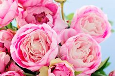 From planting peonies to peony care, there are plenty floral facts you should know before peony season. Garden Plants, House Plants, Indoor Plants, Peony Care, Peonies Season, Growing Peonies, Decoration Plante, Flowers Decoration, Seasonal Flowers