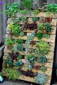 des plantes succulentes plantés dans un jardinière palette, un jardin vertical d'un grand charme