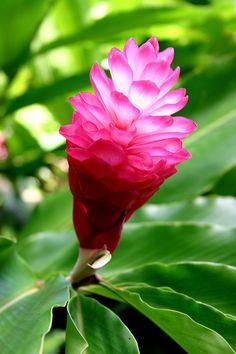 """If nature is your teacher, your soul will awaken."" — Goethe"