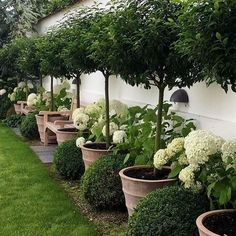 If you are looking for Small Garden Design Ideas, You come to the right place. Below are the Small Garden Design Ideas. This post about Small Garden Design Ideas. Backyard Garden Design, Backyard Fences, Front Yard Landscaping, Fence Garden, Backyard Privacy, Garden Borders, Boxwood Landscaping, Box Garden, Privacy Trees