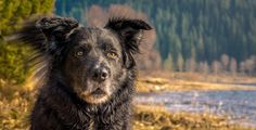 Angus by Odd Frode Aase / - Carina Beauty Photography, Husky, Dogs, Pictures, Animals, Photos, Animaux, Doggies, Animales