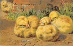 Easter~Fat Newborn Chicks Huddle in Grass~Peeks Around Bricks~1908~Ernest Nister FOR SALE • £4.89 • See Photos! Money Back Guarantee.  AP21101 Welcome to Refried.jeans Selling on Ebay for 15 Years 50,000+ in our Ebay Store... and Growing! Postcard Size: Standard 3 1/2 by 5 1/2 (Unless Otherwise Noted Above) 302268931476
