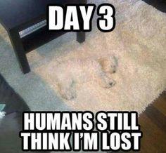 """Lost"" dog"