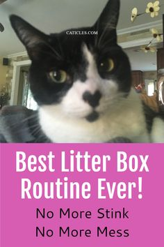Want the best litter box routine? Take mine! I only spend about 5 minutes a week cleaning the litter box. My cat uses the box every time, the litter area is clean, and it doesn't stink! I've worked with over 400 cats and this is the best litter box routine. Your cat deserves and prefers a CLEAN litter box so keep it clean! The cat's nose is much stronger than ours so cats don't like covers or nasty litter boxes. Use this guide to improve your cat's litter box today! Boxing Routine, Best Litter Box, How To Cat, Cat Nose, Cat Hacks, Cat Sitter, Cat Care Tips, Owning A Cat, Boxes