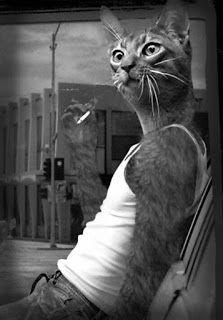 Cat dude takes a cigarette break~♛ funny cat art Crazy Cat Lady, Crazy Cats, Big Cats, Cool Cats, Cat People, Animal Heads, Photomontage, Cat Art, Pet Portraits