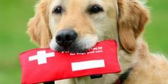 First aid kit information for your dog.. #petcare #petsworld