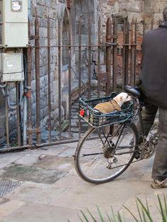Pups & Pedals....Barcelona