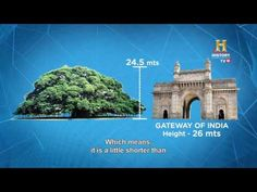 The Great Banyan Tree - OMG! Yeh Mera India - YouTube