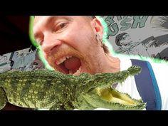 Carne, Youtube, People, Instagram, Crocodiles, The Beast, Bucaramanga, Colombia, Viajes