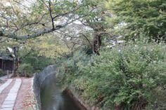 Geri dönücem Japonya aklımdasın, burada kiraz ağaçlarının altında saatlerce oturup hayal kurup kitap okuyacağım. Bekle beni… Daha fazla bilgi ve fotoğraf için; http://www.geziyorum.net/filozofun-yolunda/